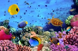 Sea Quest Aquarium