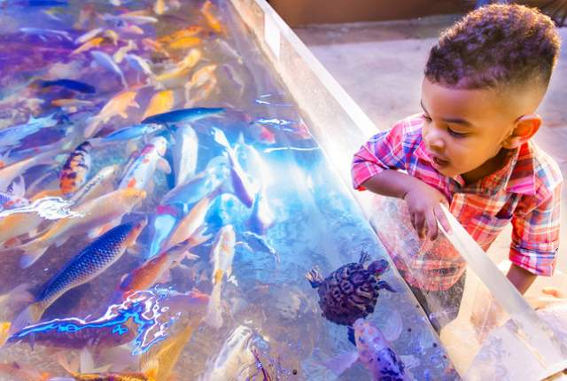 Exciting – Sea Quest Aquarium at the New Boulevard Mall